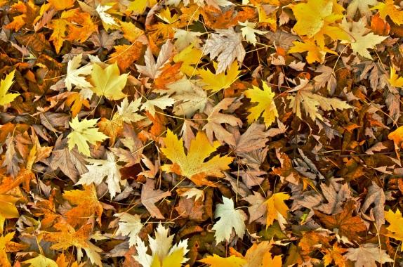 folhas-outono